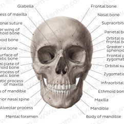 Diagram Of Skull Superior View Anatomy Polo 9n Wiring / Pictures: Anterior The (anatomy) | Kenhub