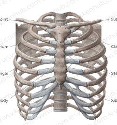 bones of the ventral trunk overview [ 1400 x 896 Pixel ]