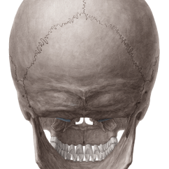 Lateral View Skull Sutures Diagram 2007 Volvo Xc90 Stereo Wiring Posterior And Views Of The - Anatomy | Kenhub