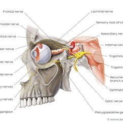 Trigeminal Nerve Diagram Single Phase Run Capacitor Wiring The Anatomy Function Branches Kenhub Overview Of Ophthalmic Lateral Left View