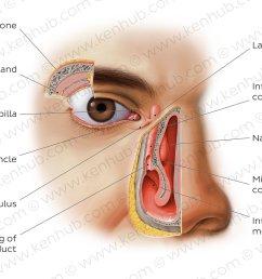 atlas lacrimal apparatus [ 1400 x 896 Pixel ]