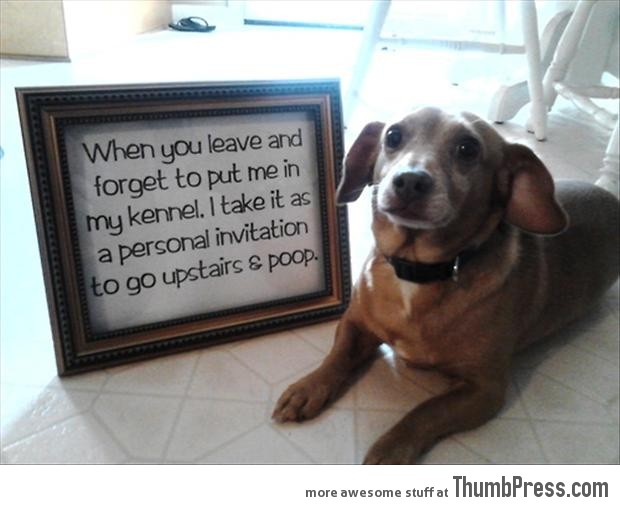 Dogs with Notes The best of Dog Shaming 50 Funny Pictures