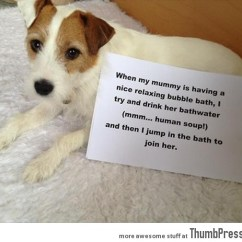 Old People Chair Lift Where To Buy Chairs Dogs With Notes: The Best Of Dog Shaming (50 Funny Pictures)