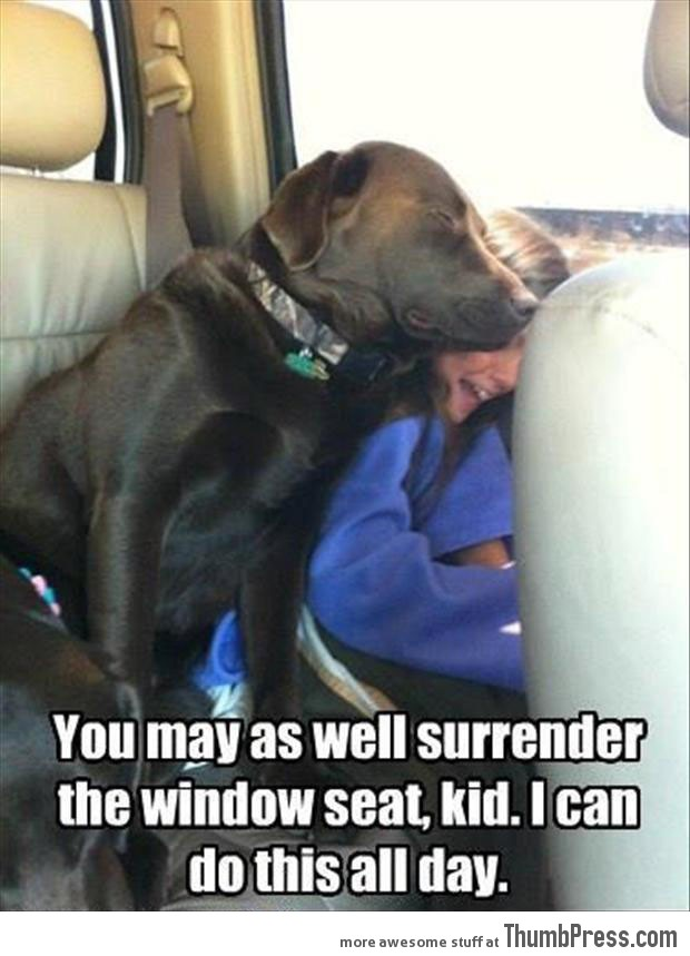 Image result for images funny quotes pets and children