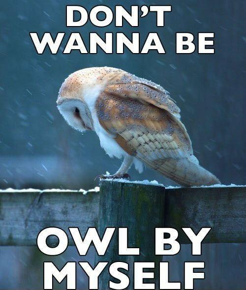 Hilariously Adorable Owl Memes 14