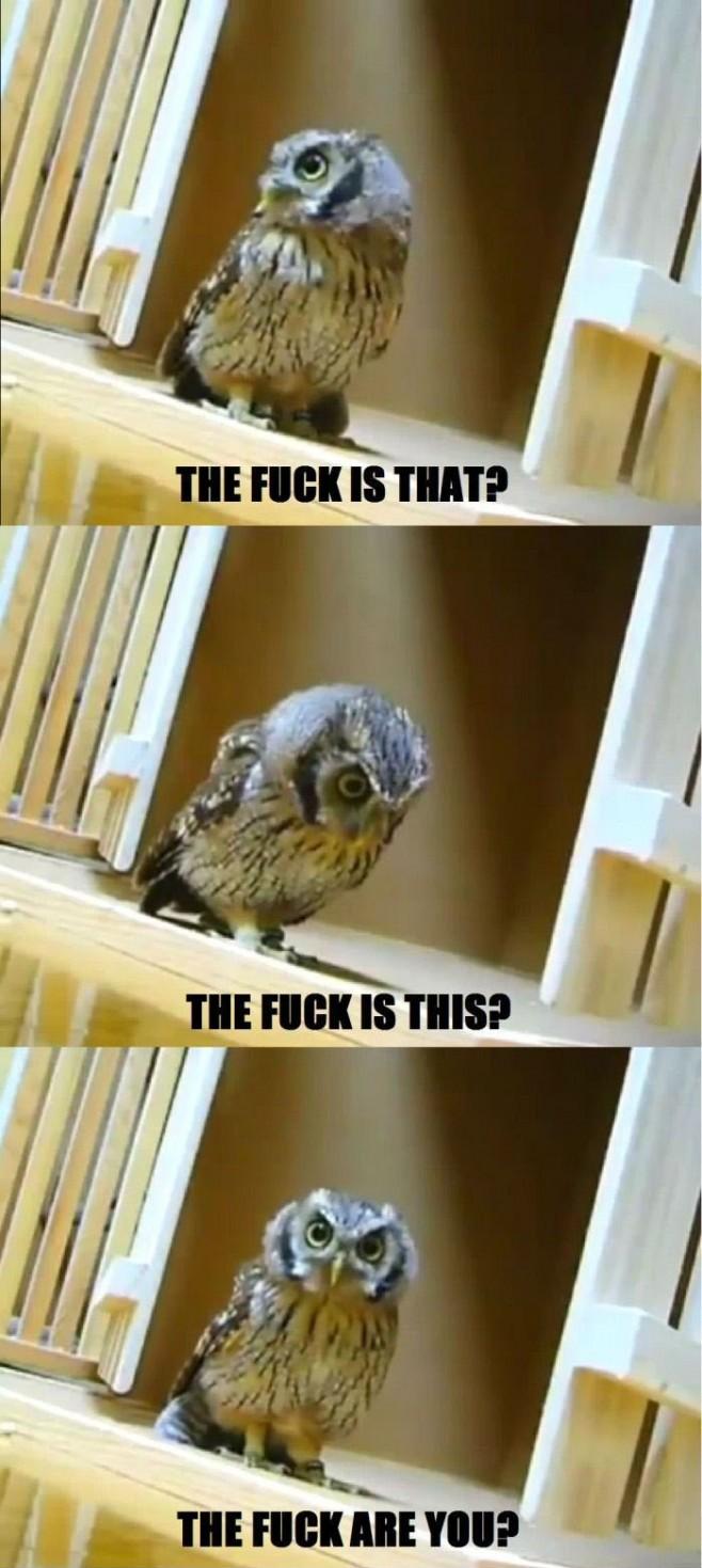 Hilariously Adorable Owl Memes 17