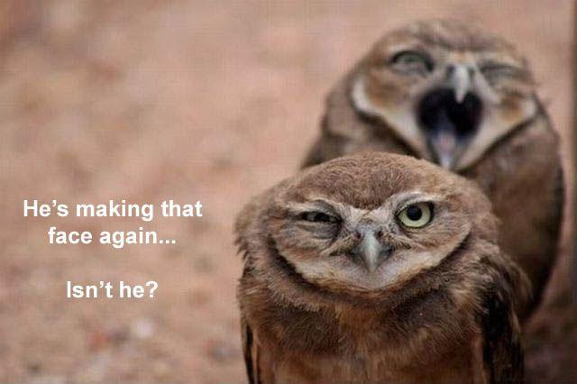 Hilariously Adorable Owl Memes 18