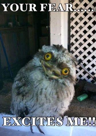 Hilariously Adorable Owl Memes 2
