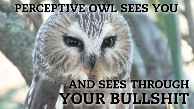 Hilariously Adorable Owl Memes 3