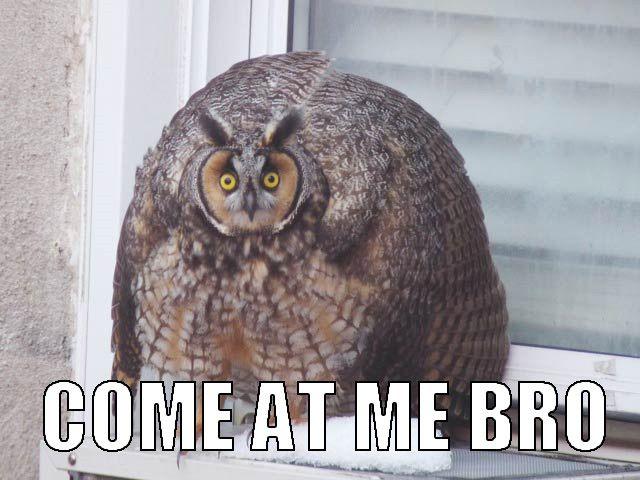 Hilariously Adorable Owl Memes 7