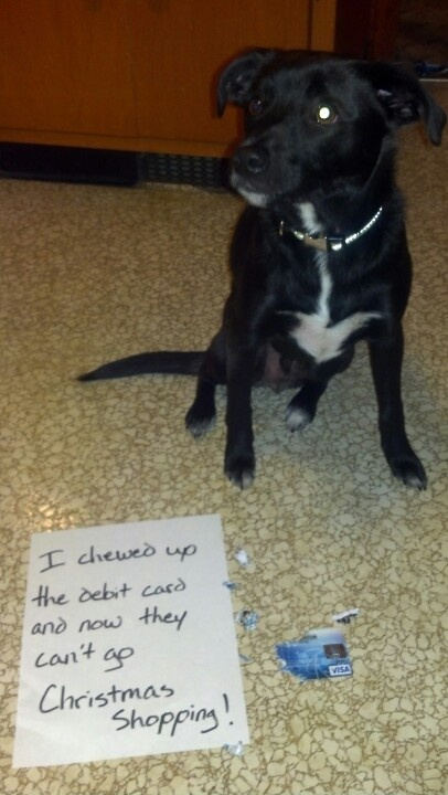 The Best Of Dog Shaming Christmas 21 Pics