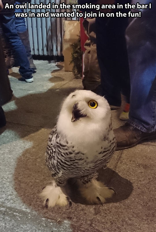 Disoriented Owl