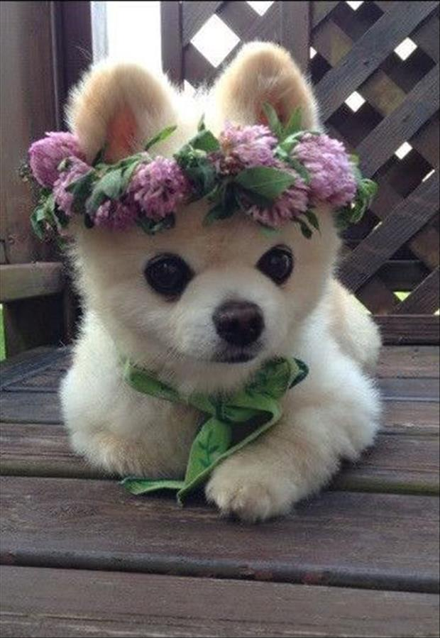 These Are Possibly the Cutest Animals On The Internet 32