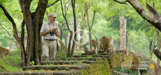 This Scientist Has Studied Monkeys for Over 50 Years