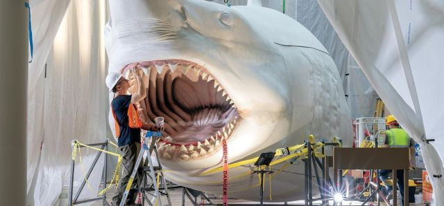 Reimagining the Megalodon