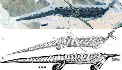 This Ancient Reptile Had a Small Head, Tiny Eyes and a Platypus-Like Bill
