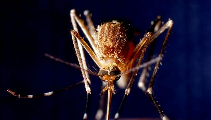 How Scientists Use Climate Models to Predict Mosquito-Borne Disease Outbreaks