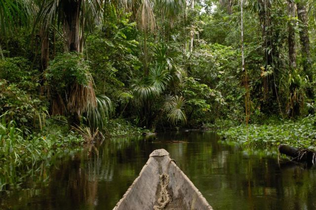 Image result for yasuni national park