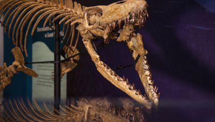"""Prehistoric Angolan """"Sea Monsters"""" Take Up Residence at the Natural History Museum"""