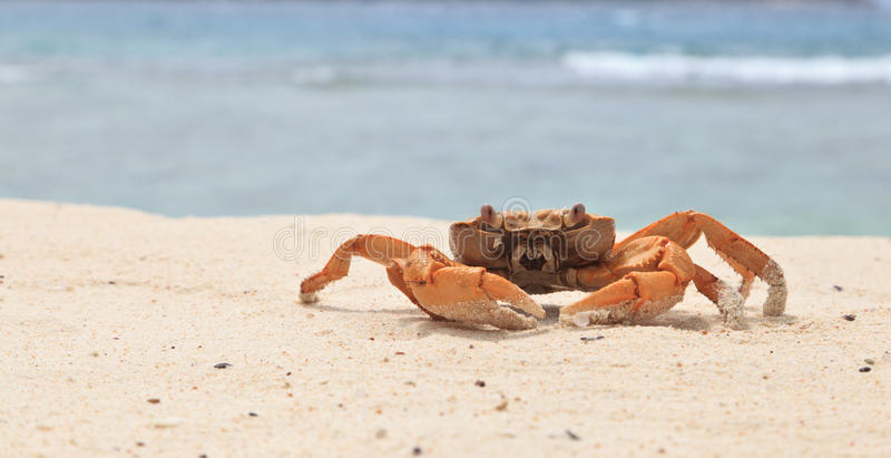 螃蟹紅色熱帶 庫存照片. 圖片 包括有 螃蟹紅色熱帶 - 6474578