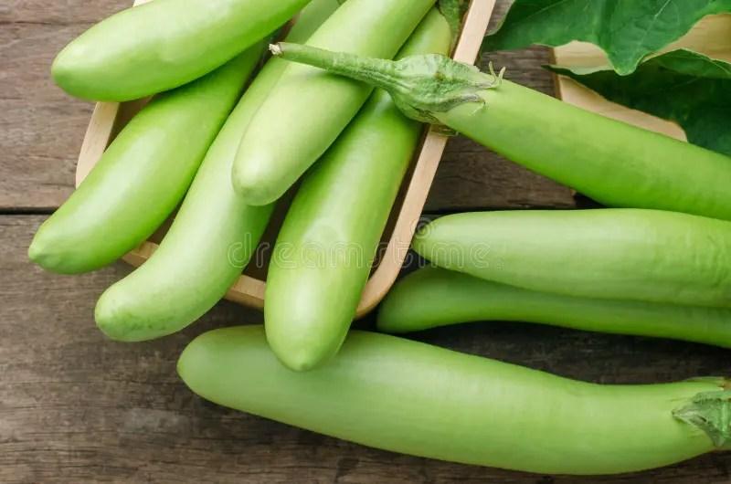 在樹的綠色茄子 庫存圖片. 圖片 包括有 在樹的綠色茄子 - 32763949