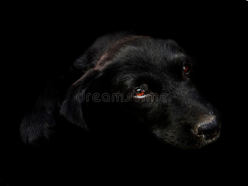 黑色小狗 庫存照片. 圖片 包括有 生活, 放置, 逗人喜愛, 雜種, 哺乳動物, 縱向, 似犬, 國內 - 13071862