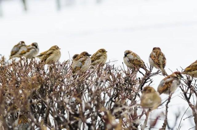 """Résultat de recherche d'images pour """"photo oiseau sans droits"""""""