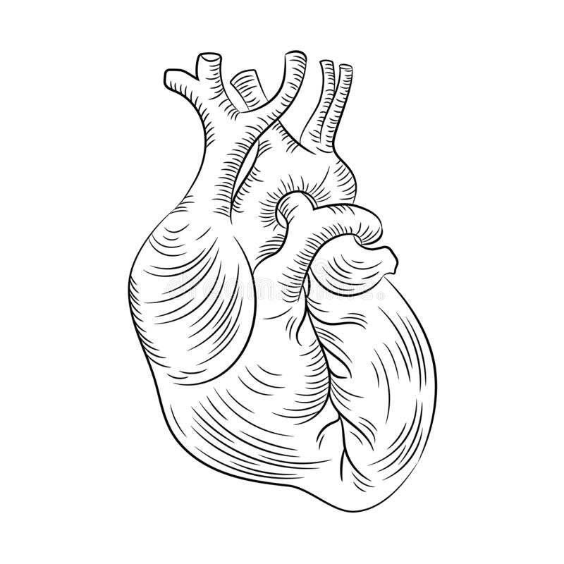 Diagram Heart Stock Illustrations