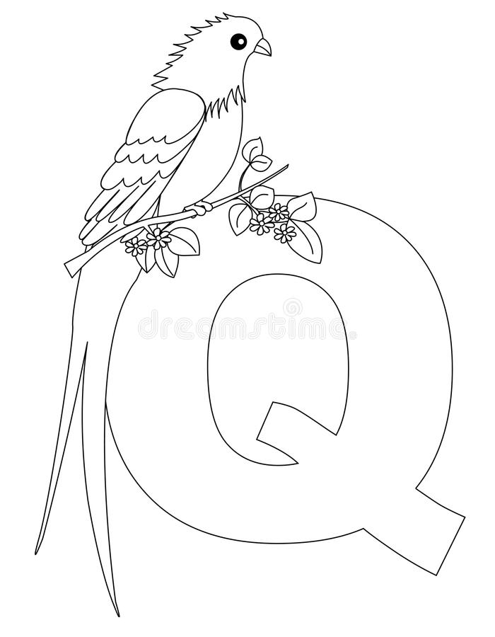 animal alphabet q coloring page stock vector