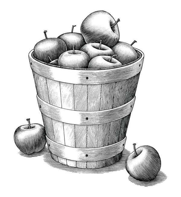vintage woodcut apples stock vector