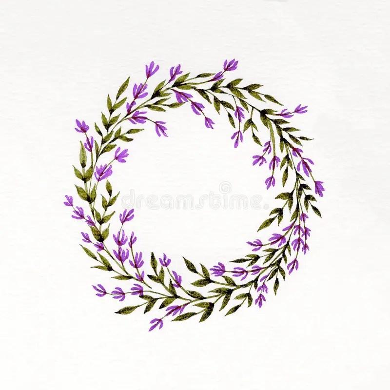 Lavendel Stock Illustrationen Vektors & Klipart