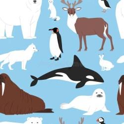 Baby Beluga Cartoon Stock Illustrations 98 Baby Beluga Cartoon Stock Illustrations Vectors & Clipart Dreamstime
