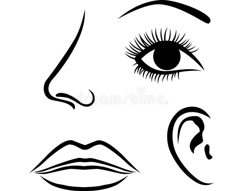 Augen, Nase, Lippen Und Ohrikone Vektor Abbildung