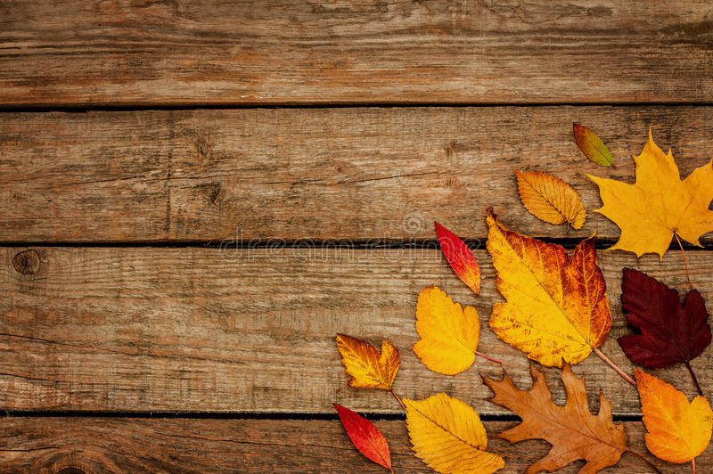 Rustic Fall Wallpaper Autumn Background Different Shaped Leaves On Wood Stock