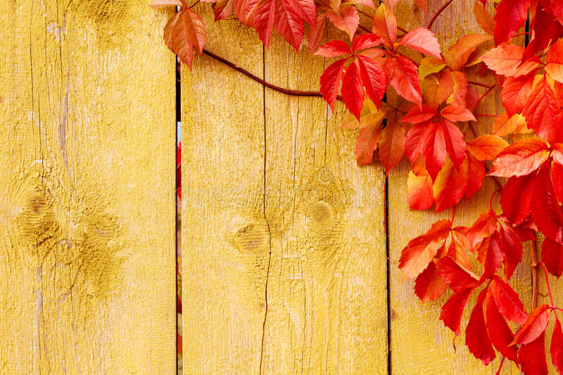 Fall Leaves Nd Burlap Wallpaper Autumn Background Red Leaves Wooden Texture Stock Photo