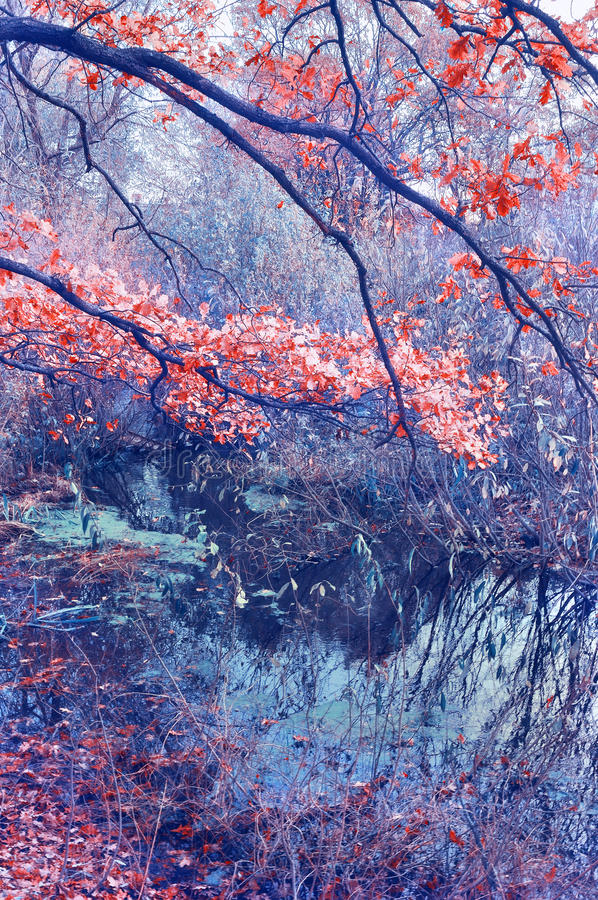 oak tree over pond stock