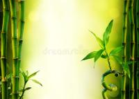 Background With Bamboo For Spa Treatment Stock ...
