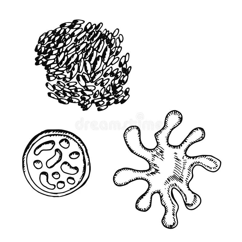Bacteria Isolated On White Background Stock Illustration