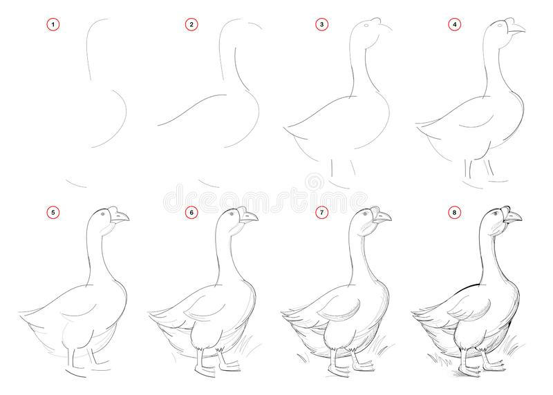 Drawing Tutorial. How To Draw A Bird Stock Vector
