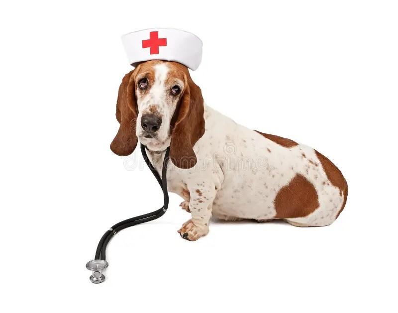 Cute Cartoon Family Wallpaper Basset Hound Nurse Royalty Free Stock Images Image 15890869