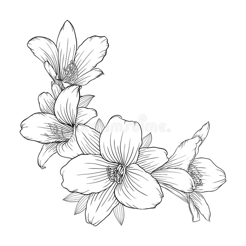 Lily Border Stock Vector