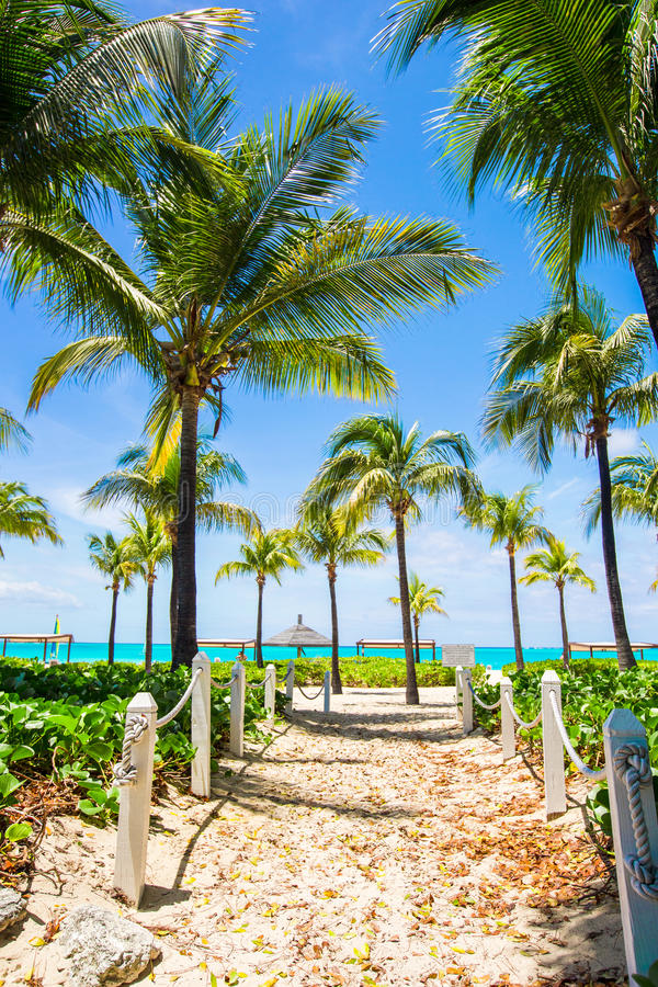 landscape of beautiful exotic tropical