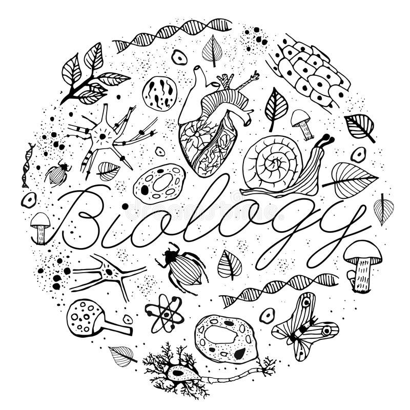 Biology VECTOR Doodles stock photo. Image of learning