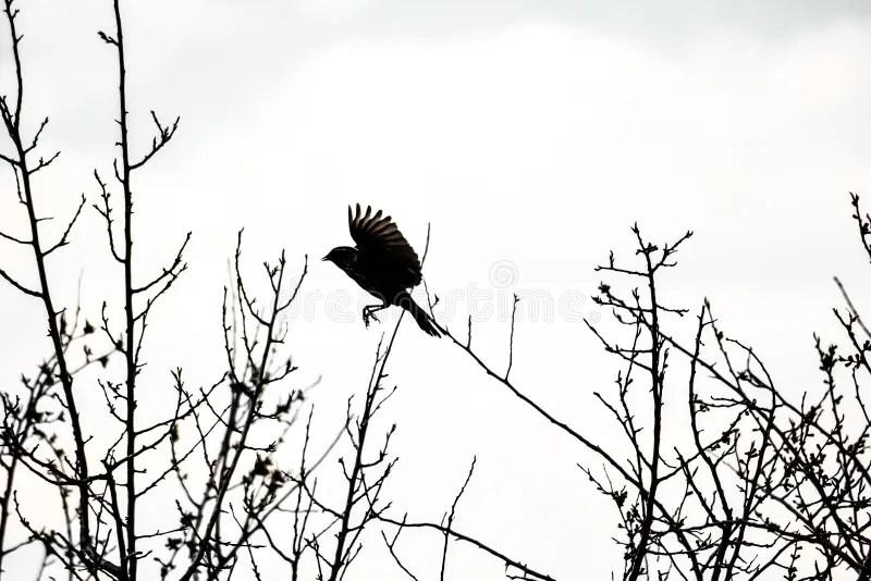 Silhouette bird stock photo. Image of birds, conservation