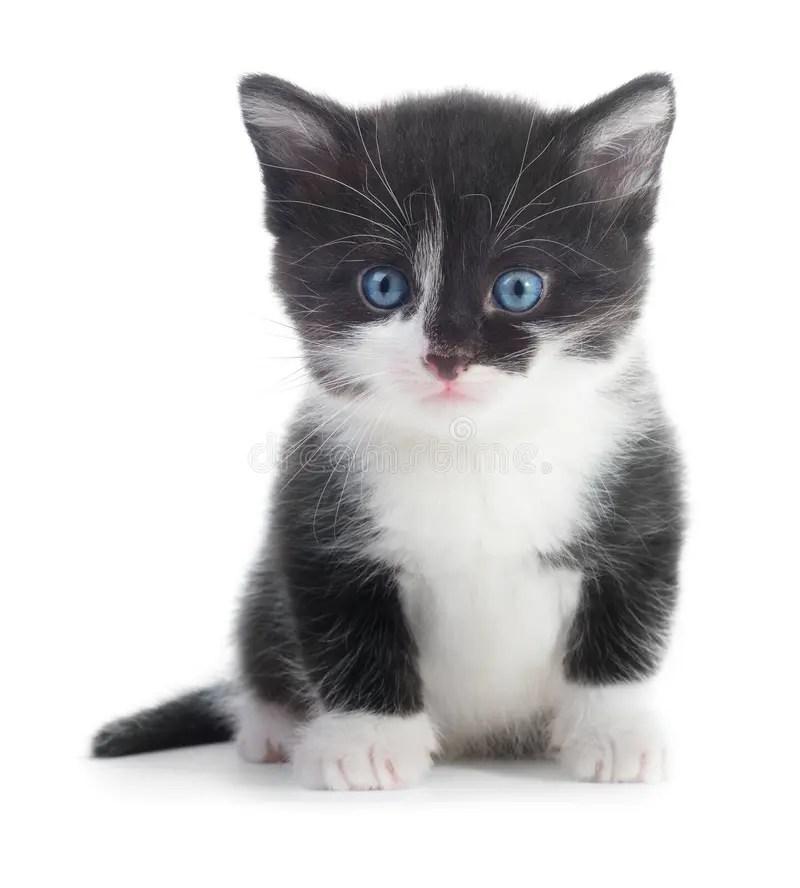 black white kitten stock
