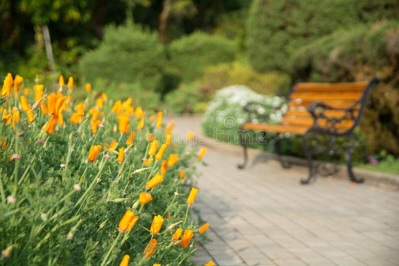 158 Background Blur Blurred Chair Garden Photos Free Royalty Free Stock Photos From Dreamstime