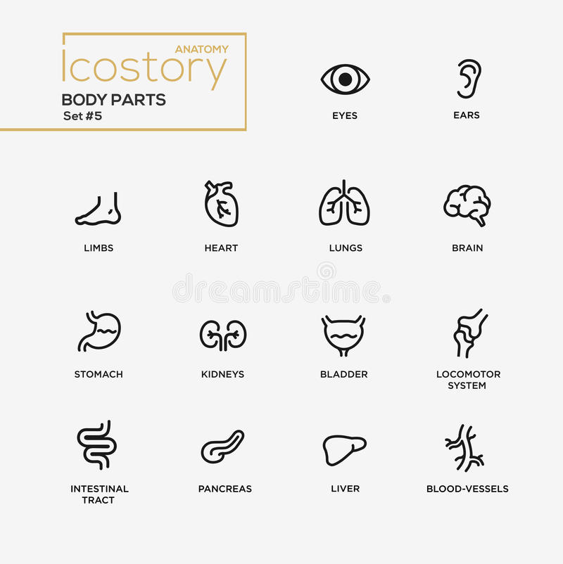 Body Parts Modern Simple Thin Line Design Icons