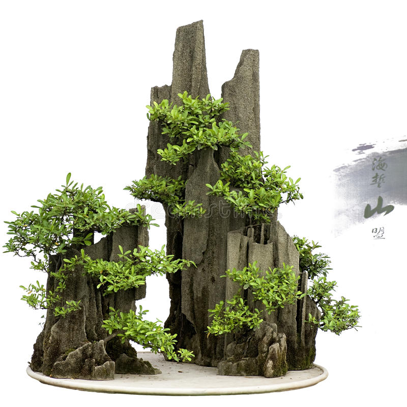 Bonsai della Cina immagine stock Immagine di miniatura