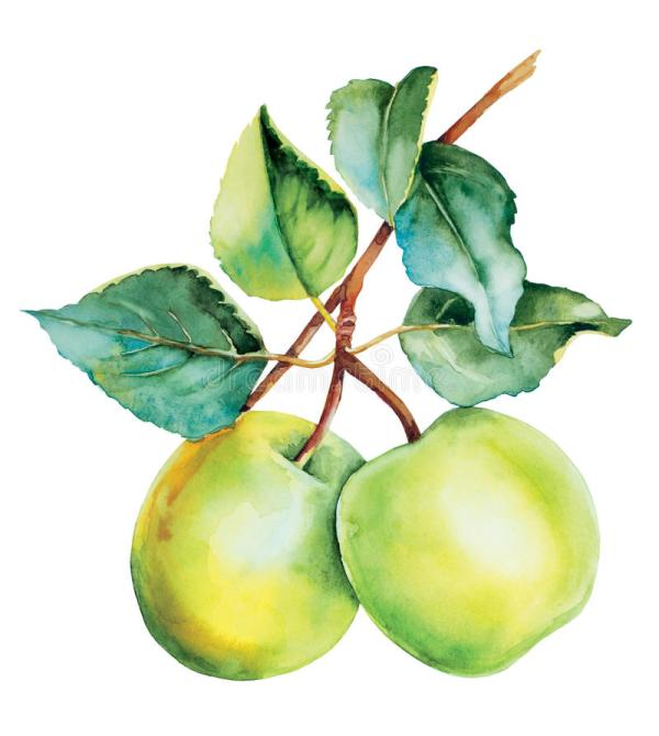 botanical green apples watercolor