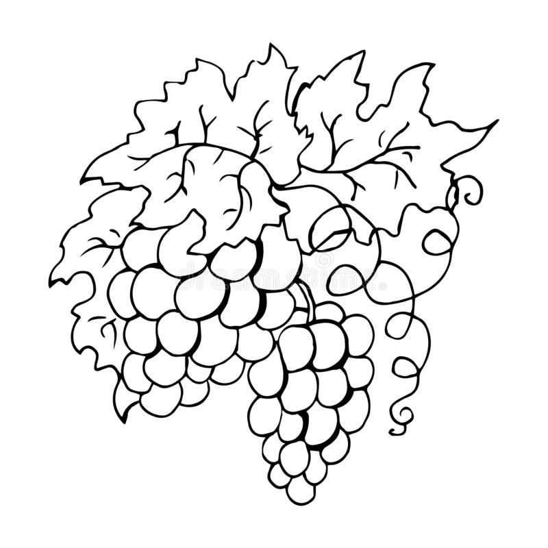 Coloring Grapes Character With Thumbs Up Stock Vector